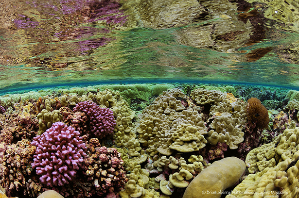 Shaloow coral reef - Kingman Reef