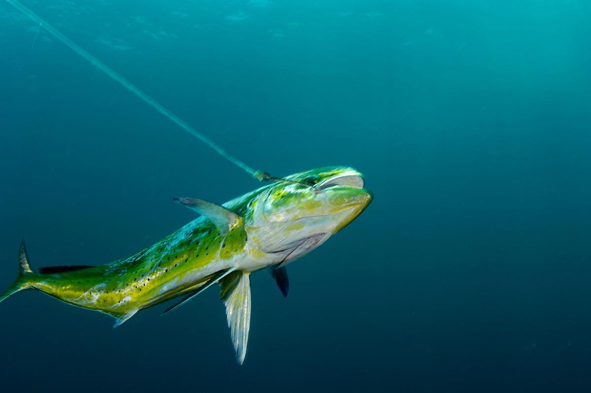 Global Fisheries - Brian Skerry